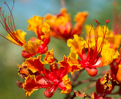 Fall_Beauty (brisno1) Tags: fall closeup flowersplants flowerscloseup