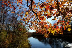 Fall tree branch leaves along river