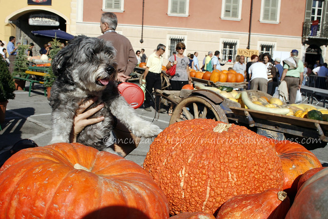 foto immagine cane alla sagra della zucca