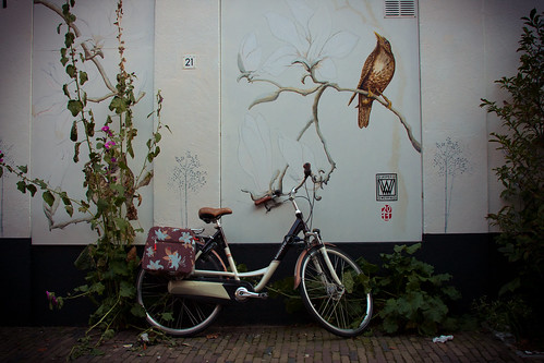 Birds & bike