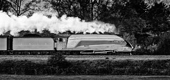 No. 4492 Dominion of New Zealand (Bill  M) Tags: england copyright bill martin transport places trains steam cameras styles a4 hertfordshire lner 4492 olympuse3 niksilverefex welhamgreen copyrightbillmartin2011 4492dominionofnewzealand copyrightbillmartin