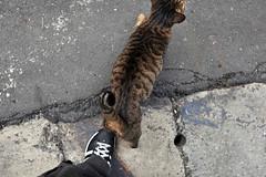 () Tags: cat 35mm nikon taiwan taipei dslr fx  352  d700