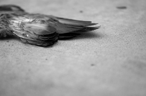 Dead Bird Diaries - October 2011-3-2