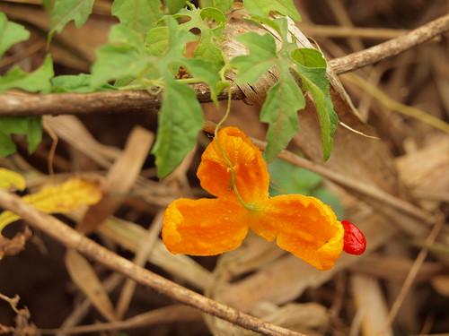 Flor desconhecida by MauFeitio