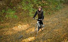 Jesienne rowery (jacek.staszczuk) Tags: autumn bicycle poland polska beech buk rower jesie lowersilesia dolnylsk nikkor1870f3545 nikond7000 cobse