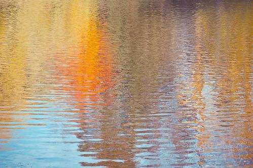 303:365 Autumn abstract