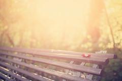 octobers' golden sun (Maegondo) Tags: sunset sun nature backlight canon vintage germany bench bayern deutschland bavaria october sundown 14 sigma dreamy vanilla monday hazy creamy gegenlicht ingolstadt 30mm eos550d vanillaroid