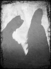 Unconditional love (Guido Havelaar) Tags: dog chien dogs goldenretriever hound retriever perro hund schwarzweiss pretoebranco iphone neroeblanco cão grcn fotosdelperro fotosdocão