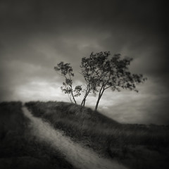 The Path (Jeff Gaydash) Tags: longexposure trees blackandwhite square landscape michigan dunes tiltshift