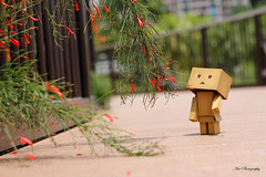 Danbo at the Park (Anthony Leow) Tags: anime toy toys photography japanese dashboard yotsuba danbo revoltech