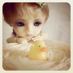 Ginger and little duck from aunt