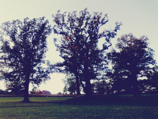 trær03 copy