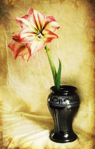 * Lilies *