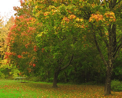 maples (Per Ola Wiberg ~ Powi) Tags: oktober nature beautiful sweden maples fairplay lnn ineffable naturegroup favoritephotos 2011 natureworld autumnfall thegalaxy eker wrangels naturesgallery bforbeauty eperke flckrhearts dreamplaces natureiswonderful thebeautyoftrees naturesphotos naturescreations amazingnaturephotos addictedtonature exquisitecapture natureoftheuniverse naturesribbon fabulousplanet bestpeopleschoice thenaturessoul themagicofthenature earthofnature 2heartsaward peaceandheart brigettesbeautifulnaturegallery naturespoetry~~ bbng