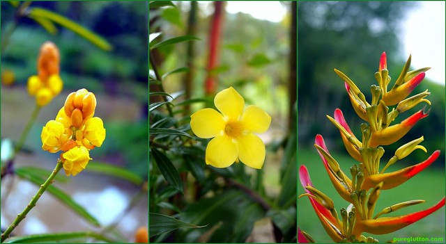 YELLOWS collage