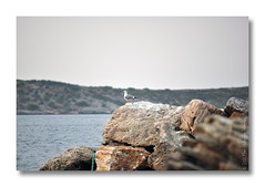 Lonely seagull (Manos Eleftheroglou (Photography)) Tags: blue autumn winter sunset sea sky seagulls seascape film nature beautiful island greek nikon europe day natural seagull north aegean scenic hellas scene greece griechenland soe samos waterscape agia 2011 supershot paraskevi  abigfave   d5000 anawesomeshot   flickraward  platinumheartaward    nikonflickraward artofimages nikond5000 doubleniceshot mygearandme blinkagain makisamos