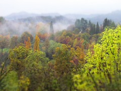 3D Foliage | Valdengo edition (! .  Angela Lobefaro . !) Tags: autumn trees mist tree fall love window colors leaves rain misty canon landscape countryside 3d italia country foliage finestra piemonte rainy chateau schloss biella autunno castello borgo piedmont chateaux allrightsreserved burg countyside tiltshift valdengo 2011 biellese castellodivaldengo angiereal angelamlobefaro sx30is riproduzioneriservataitaly pwpartlycloudy