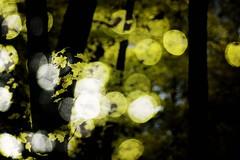 Golden Lights (a. s p i t e r i) Tags: trees light tree yellow forest dark lights golden bokeh doubleexposure