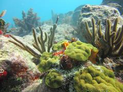 Aquatic Utopia. (Le' Louie) Tags: ocean blue sea green water coral keys colorful soft florida live hard system atlantic whip flowing algae reef eco polyp coralline