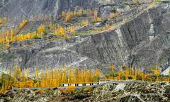 Here And There (Amir Mukhtar Mughal | www.amirmukhtar.com) Tags: autumn trees pakistan mountain colors yellow canon buildings colours amir kkh silkroute mughal mughals pakistanphotos pakistanimages autumnphotography amirmukhtar wwwamirmukhtarcom amirphotog000804minapin