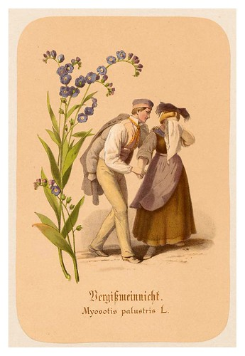 008-Nomeolvides-Illustrirtes Kräuterbuch –Aquarelle- 1870-Adolf Schroedter