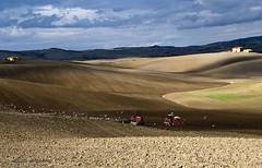 ... LA SEMINA E ... I GABBIANI ... (mauro855) Tags: italia natura siena toscana paesaggi gabbiani semina panorami 2011 nikond60 abigfave castigliondorcia mauronizzi mygearandme magicavalle