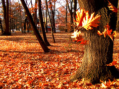 Carpet of Leaves (Paula ) Tags: park autumn trees fall nature leaves forest bench alley woods gazebo autumnleaves autumncolors romania baiamare maramures carpetofleaves