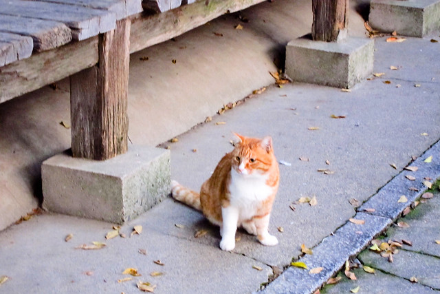 Today's Cat@2011-11-14