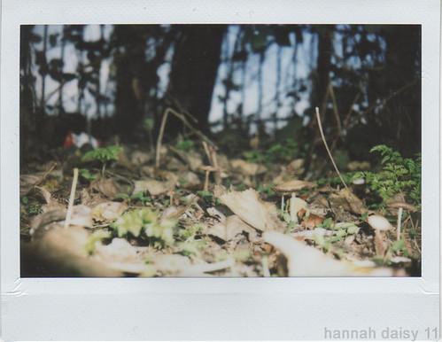 late autumn mushrooms