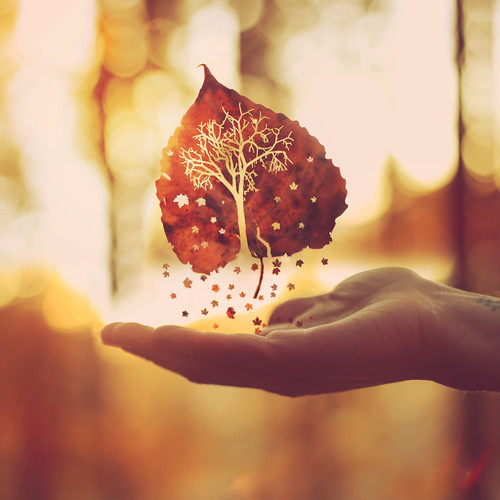 """""""Autumn is a second spring when every leaf is a flower."""""""