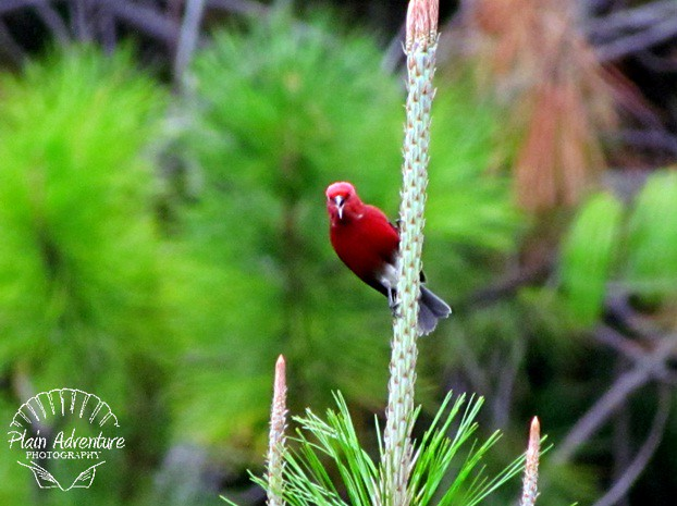 Tropical Red Bird