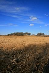 Late Autumn . . . Simplicity (doc030395) Tags: grass island landscapes native iowa foliage oaks mountvalley