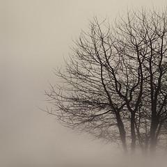 """No leaves"" (helmet13) Tags: mist tree monochrome bare silence simplicity studies gettyimages aoi 100faves leicadlux3 world100f bestcapturesaoi"