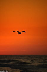 The Early Bird (D. Photos) Tags: orange bird beach water sunrise newjersey nikond2x atlanticcitybeach debbiephotos silhouettebird nikon70200mmlens