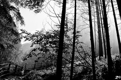 Road to light _ B&W (Riccardo Brig Casarico) Tags: road blackandwhite bw italy sun white black mountains flower tree nature water colors rain alberi wow landscape photography photo blackwhite reflex nikon europa europe strada italia colours foto estate details dettagli fotografia nikkor sole sentiero acqua alto colori montagna bianco atmosfera nero bianconero paesaggio trentino biancoenero brig altoadige 18105 cascate adige riki camminare naturesfinest fiumi boschi atmosphre d5100 brigrc