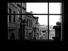 A window to the world of Istanbul, Tarlaba (adde adesokan) Tags: street blackandwhite bw white black window pen cat turkey asia asien europe trkiye streetphotography olympus istanbul trkei sw 20mm schwarzweiss schuhe schwarz catcontent ep1 beyolu streetphotographer m43 mft tarlaba mirrorless microfourthirds theblackstar mirrorlesscamera streettogs addeadesokan