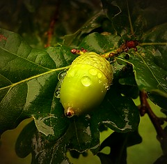 camera uk light england macro tree green texture nature... (Photo: Мaistora on Flickr)