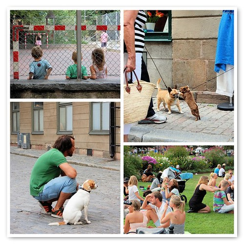 stockholm, people, dogs