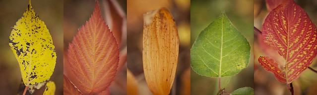 leaf portraits