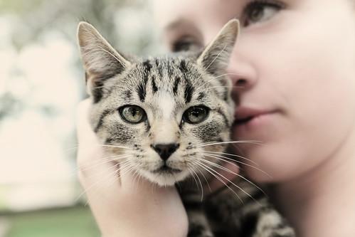 Pw Kitten