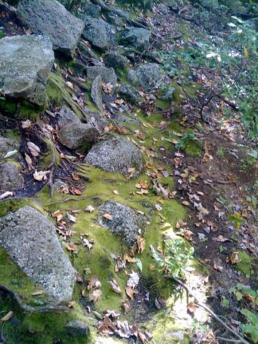 Flowing Moss