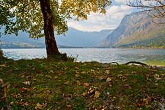 Under the tree (Karmen Smolnikar) Tags: lake mountains tree nature slovenia slovenija bohinj groundleaves