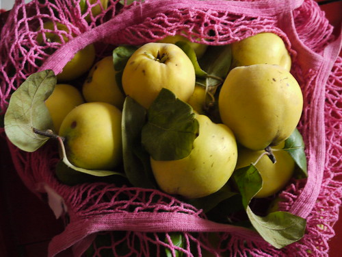 quinces in bag