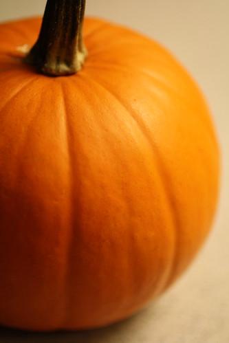 Orange by goaliej54