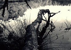 Log in the wetland (Amature Aaron) Tags: sunset tree water log nikon refelection l5