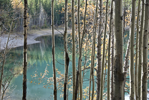 Wedge Pond Through the Aspen Grove by madlyinlovewithlife, on Flickr