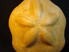 www.fossilplanet.com,clypeaster mutellensis,fossil urchin,miocene,el algarve,portugal (FOSSILPLANET) Tags: portugal miocene elalgarve fossilurchin clypeastermutellensis