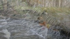October at Hathaway Preserve (rsteup) Tags: autumn fall nature waterfall video october stream indiana canondslr hdvideo canoneos60d videoonflickr acreslandtrust fwfg canoneosvideo