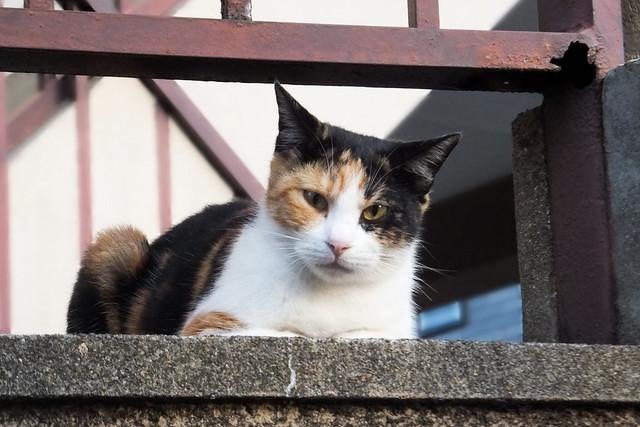 Today's Cat@2011-10-24