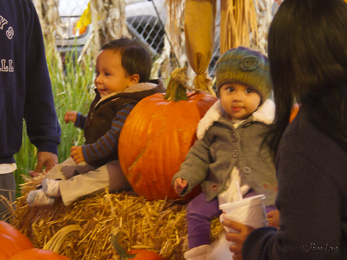 Pumpkin patch toddlers